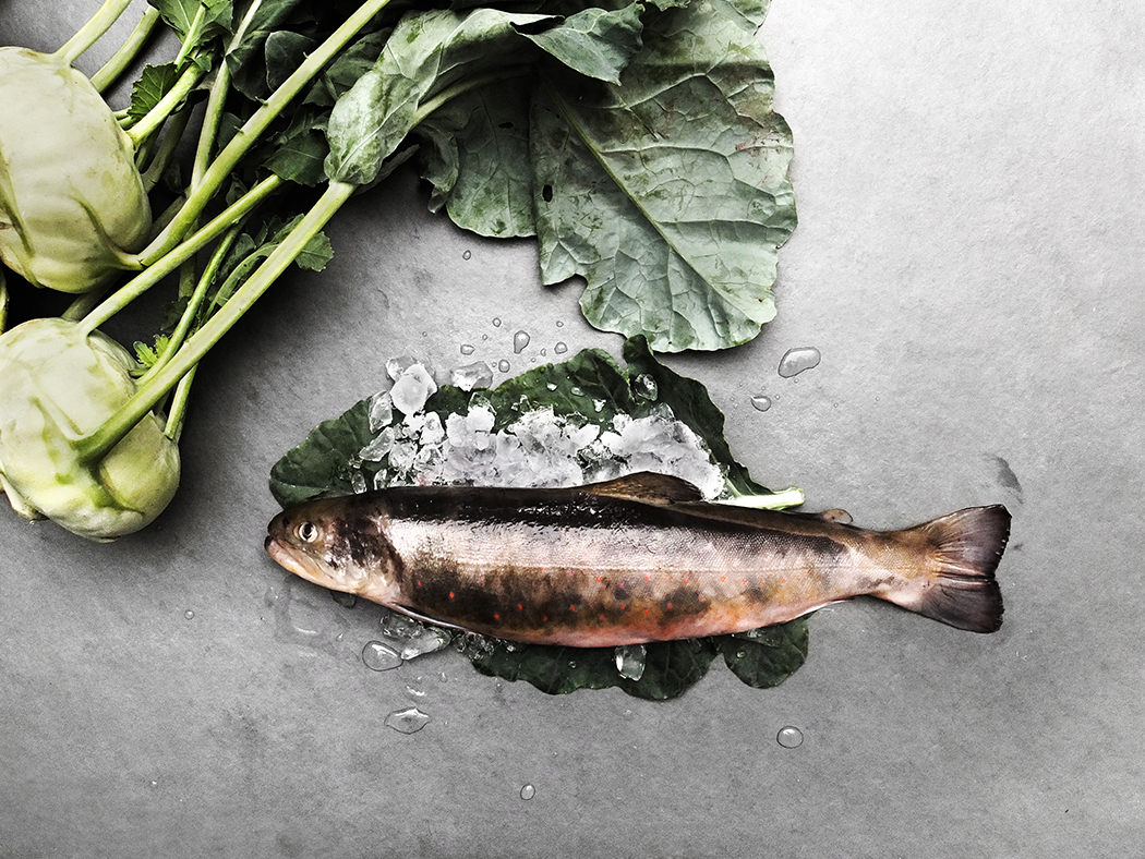 Confit lake trout with orange oil and creamy Kohlrabi
